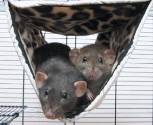 Ratten Doppelhängematte