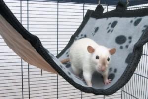 Rattenhängematte